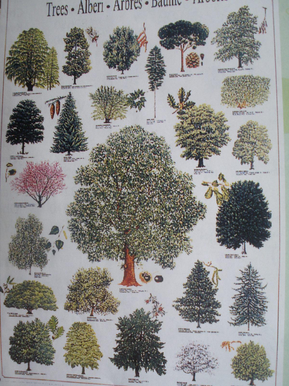 Lesné stromy