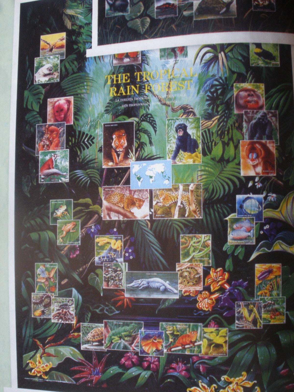 Živočíšstvo arastlinstvo tropických pralesov