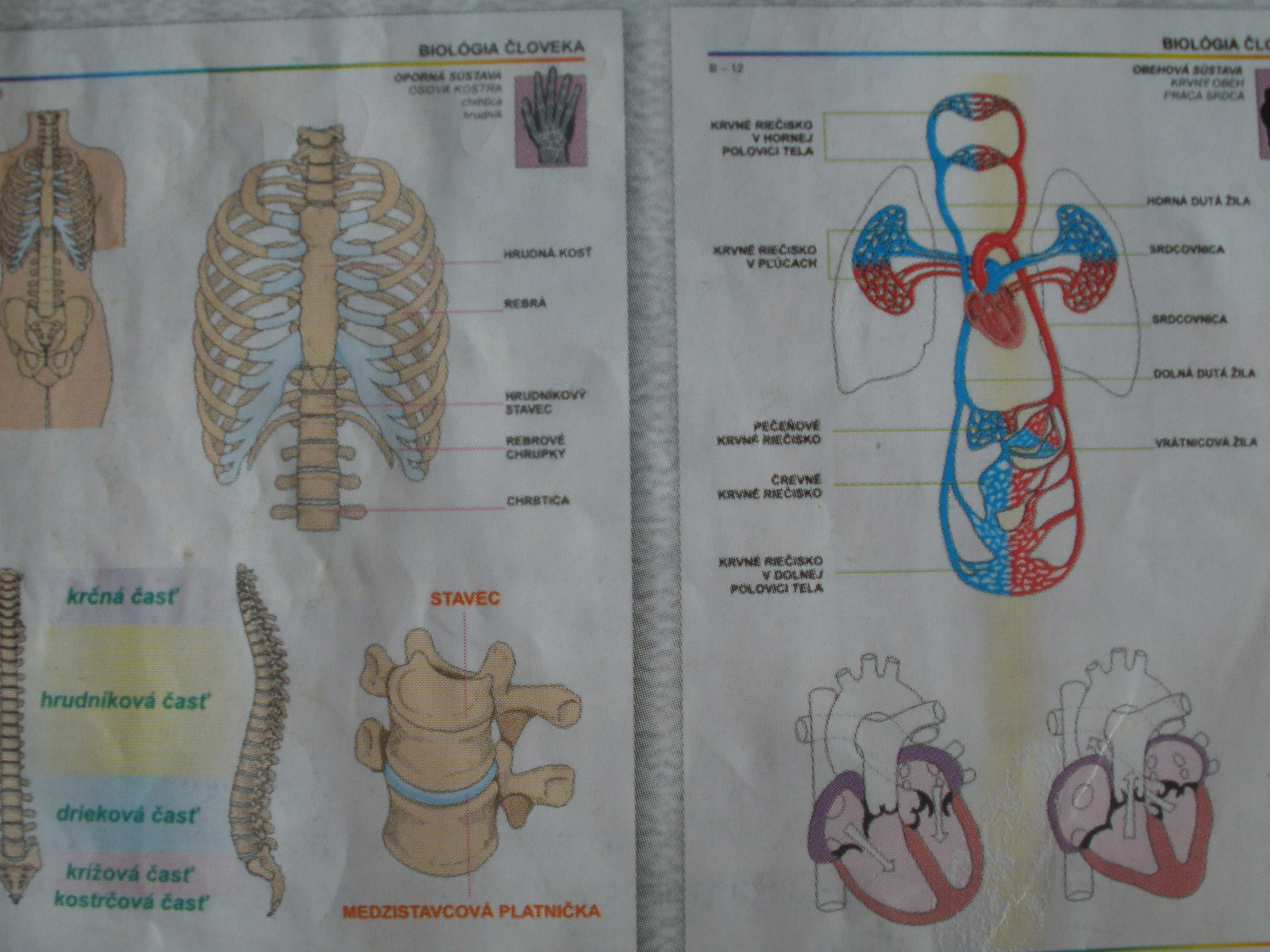 Biológia človeka I. pre ZŠ, SŠ = 26 ks fólií