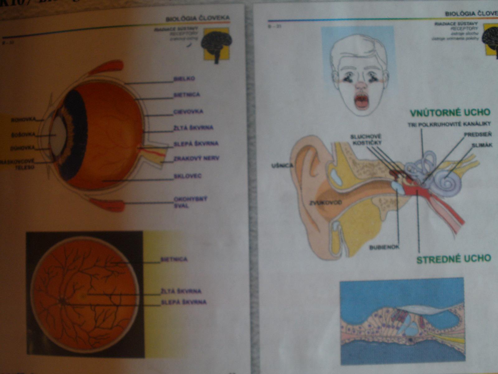 Biológia človeka II. pre ZŠ, SŠ = 26 ks fólií