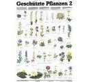 Chránené rastliny  II.