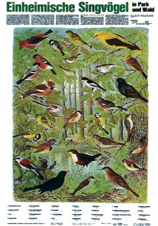 Vtáctvo našich lesov aparkov