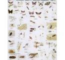 Užitočné achránené živočíchy II. (hmyz, pavúky, raky, mäkkýše)