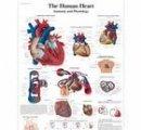 Srdce = 50x67 cm
