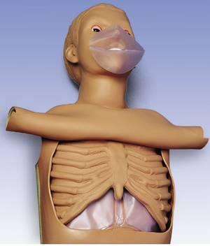 CPR simulátor, torzo