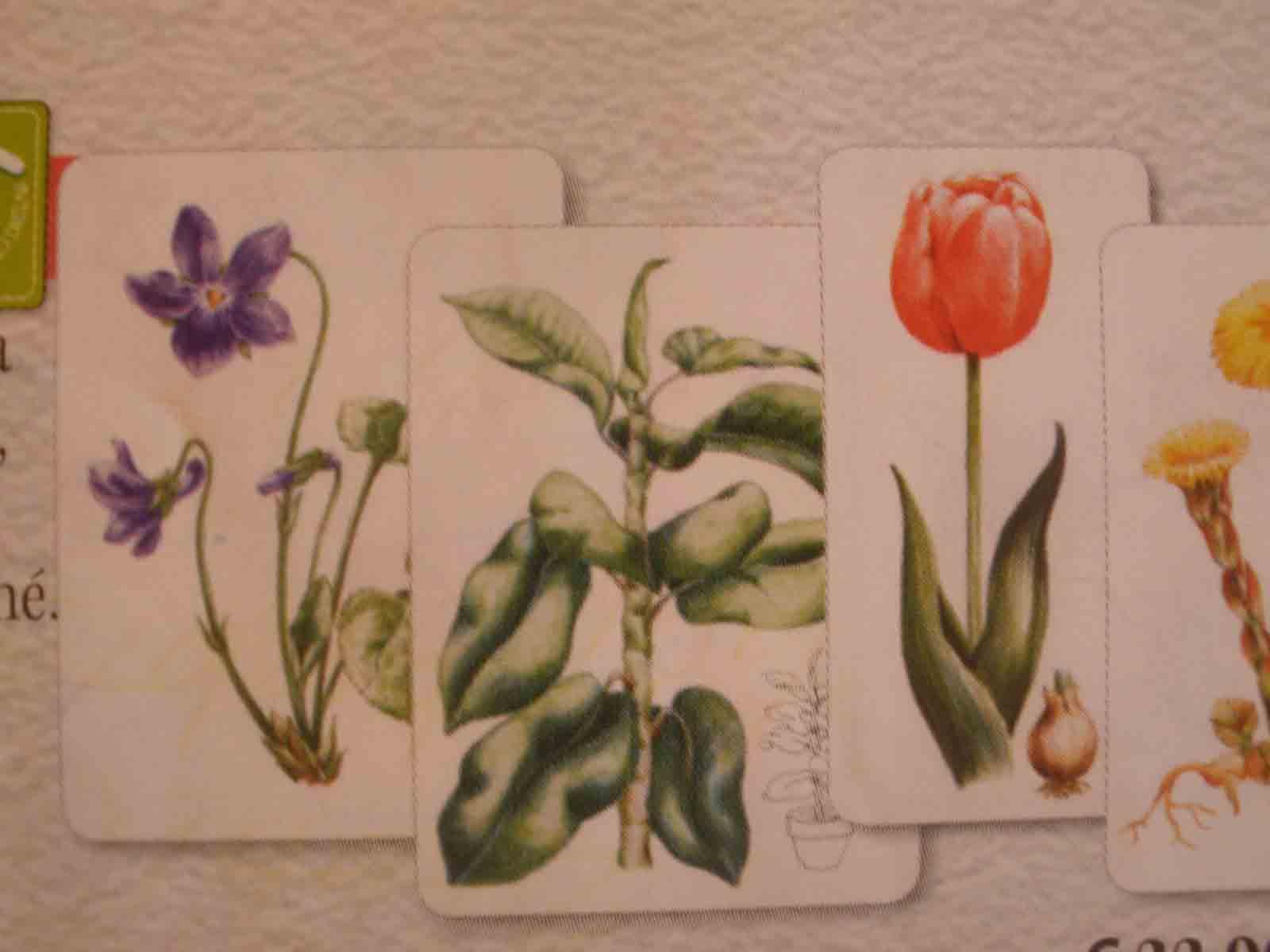 Naše kvety