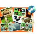 Hra Zvieratá a príroda (25 zvukov a ich názvy)