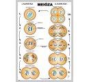 Meióza, nástenná tabuľa