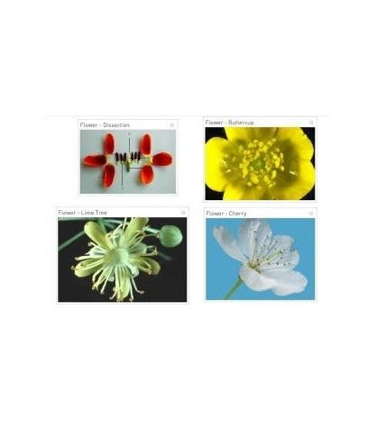 Výukový SW Sunflower learning - Biológia - licencia na 5pc