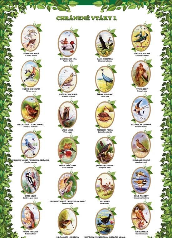 Chránené vtáky I.