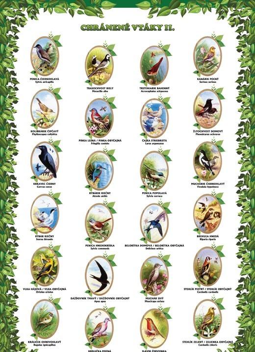 Chránené vtáky II.